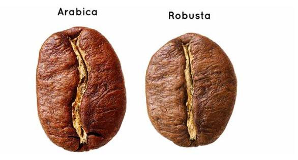 cà phê robusta arabica